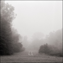 Road Through The Fog #1