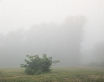 Foggy September Morning #1