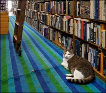 Sherlock The Bookstore Cat #1