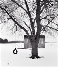 Backyard Tire Swing #2