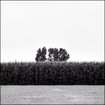 A Field On Yoder Road #2